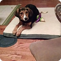 Adopt A Pet :: Carly - Richmond, VA