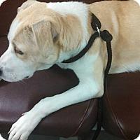Adopt A Pet :: Tonka - Shelter Island, NY