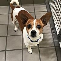 Adopt A Pet :: Casey (Westhampton) - New York, NY