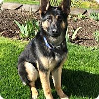 Adopt A Pet :: Gretta - Woodinville, WA