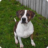 Adopt A Pet :: Jill, joyful & energetic! - Snohomish, WA