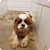 Adopt A Pet :: FRANCIS - WOODSFIELD, OH