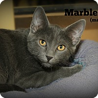 Adopt A Pet :: Marble - Springfield, PA
