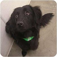 Adopt A Pet :: Elizabeth - Phoenix, AZ
