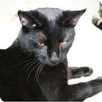 Adopt A Pet :: Thunderbolt - Naples, FL