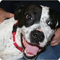 Adopt A Pet :: max - Covington, KY