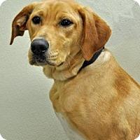 Adopt A Pet :: Sweet Pea - Port Washington, NY