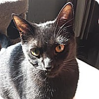 Adopt A Pet :: Tori Amos - Chicago, IL