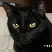 Adopt A Pet :: Ashley - San Jose, CA