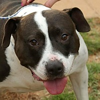 Adopt A Pet :: Cyndi - Newnan, GA