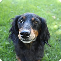 Adopt A Pet :: Bogie - ADOPTION PENDING - Marcellus, MI