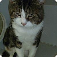 Adopt A Pet :: Maxwell - Hamburg, NY