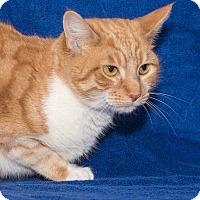 Adopt A Pet :: Connie - Elmwood Park, NJ