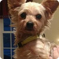 Adopt A Pet :: Toby - Centreville, VA