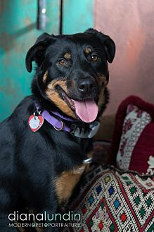 German Shepherd Dog/Rottweiler Mix Dog for adoption in Van Nuys, California - Maggie May