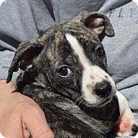 Adopt A Pet :: PAIGE-ADOPTED - Cranston, RI