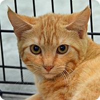 Adopt A Pet :: 10309825 - Brooksville, FL
