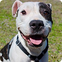 Adopt A Pet :: Lola - Ft. Myers, FL