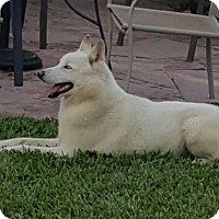 Adopt A Pet :: Loki - Justin, TX