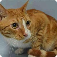 Adopt A Pet :: JEFF - Brooklyn, NY