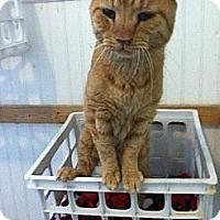 Adopt A Pet :: Elvis - Colfax, IL