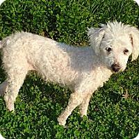 Adopt A Pet :: TRISH - ROCKMART, GA