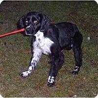 Adopt A Pet :: Louie - Tacoma, WA