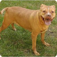 Adopt A Pet :: Gracie - Chicago, IL