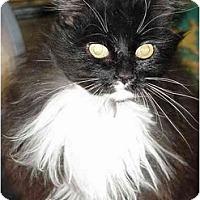 Adopt A Pet :: Cookie - Chesapeake, VA