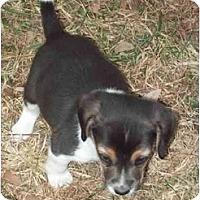Adopt A Pet :: Bruiser - cedar grove, IN
