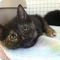 Adopt A Pet :: Cupcake - Trevose, PA