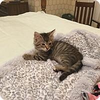 Adopt A Pet :: JOSHUA - Hamilton, NJ