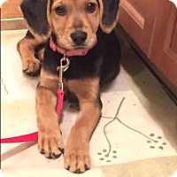 Adopt A Pet :: Lucy - Bridgewater, NJ