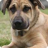 Adopt A Pet :: Kota - Knoxville, TN