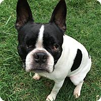 Adopt A Pet :: Bubbles - Greensboro, NC