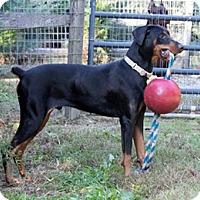 Adopt A Pet :: SERGEI - Greensboro, NC