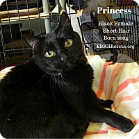 Adopt A Pet :: Princess - Temecula, CA
