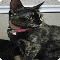 Adopt A Pet :: MERCI - Houston, TX