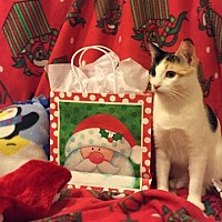 Adopt A Pet :: Polly - Mission Viejo, CA