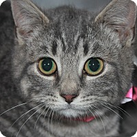 Adopt A Pet :: SATIN - Clayton, NJ