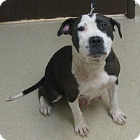 Adopt A Pet :: Mandy - Gary, IN