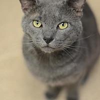 Adopt A Pet :: Baloo Barrow 170032 - Atlanta, GA