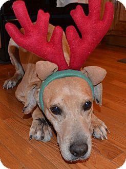 Labrador Retriever Mix Dog for adoption in Ocala, Florida - Tucker ($200 Fee)