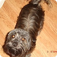 Adopt A Pet :: Princess - Denver, CO