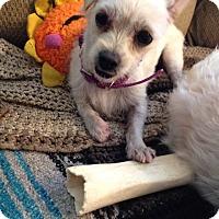 Adopt A Pet :: Daisy-WATCH MY VIDEO!!! - Irvine, CA