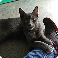 Adopt A Pet :: Kory - Topeka, KS