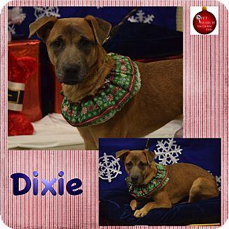 Shepherd (Unknown Type) Mix Dog for adoption in Washington, Pennsylvania - Dixie