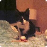 Adopt A Pet :: Heart - Seminole, FL