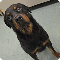 Adopt A Pet :: Jasper - Rexford, NY