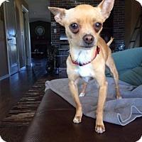 Adopt A Pet :: Tyra - Leduc, AB